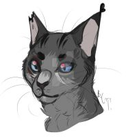 CAT by beneheartcat