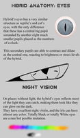 Hybrid anatomy: Eyes