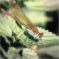 Little Creatures 075 by Frank-Beer