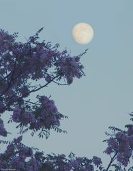The Moon And Acacia by LindaMarieAnson
