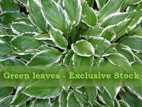 ExclStock GreenLeaves by Gwathiell