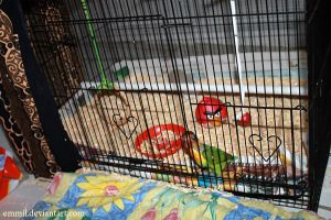 Peewee weaning cage by emmil