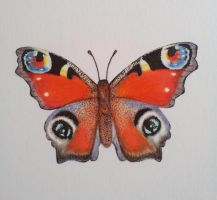 Peacock butterfly by shell31