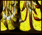 apple slices by istarlome