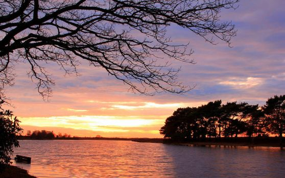 New Forest sunset by Bigbear100