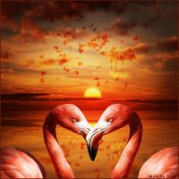 Amour en Rose by MireilleD