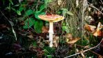 Odenwald Fungi (15) by Paseas-Images