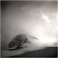 If only I were a tree... by aftercode