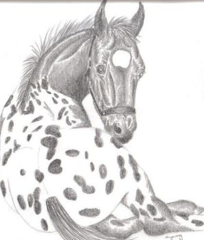 Appaloosa Foal by EquineInterludes