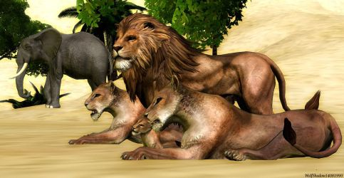Lion family by WolfShadow14081990