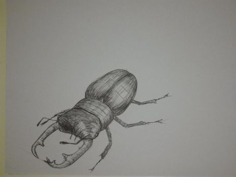 Inktober 2017, Day 10: Beetle by GLangGould