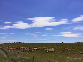Photogallery 2015 - 20 sheep by Ingnition by Ingnition