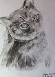 Charcoal Wessie the Cat by catbehaviors