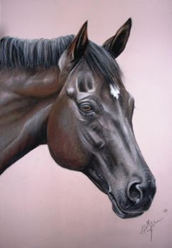 Horse Drawing in pastel by lalabellexx