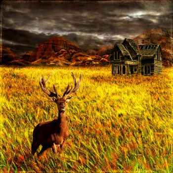 Home on the range by Inadesign