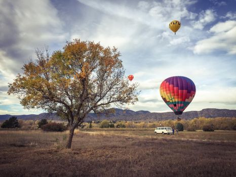 Balloons Stuck In A Tree by JANorlin