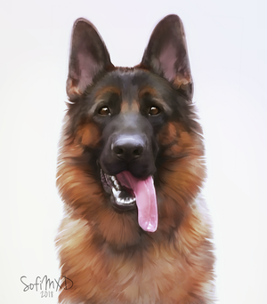 [portrait#2] German shepherd by SofiMXD