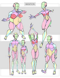 Simplified Anatomy Variations by Sycra