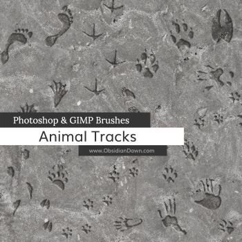 Animal Tracks Photoshop and GIMP Brushes by redheadstock