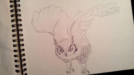 Owl by anythingLDA