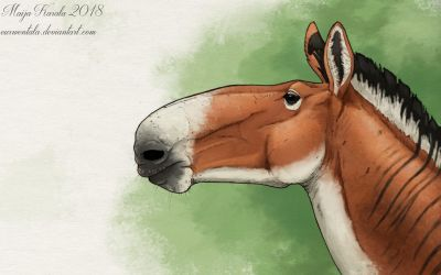 The Little Horse with a Big Nose by Eurwentala