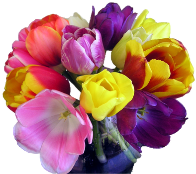 tulips mixed bouquet by wasshere
