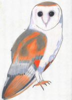 Barn Owl by EnigmaticEpidemic