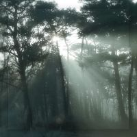 Forest dreams II ... by MOSREDNA