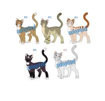 Cat Adoptables Litter 1 CLOSED by funlakota