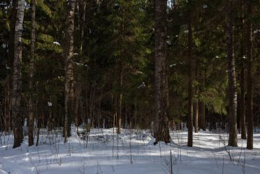 March forest by ManicHysteriaStock