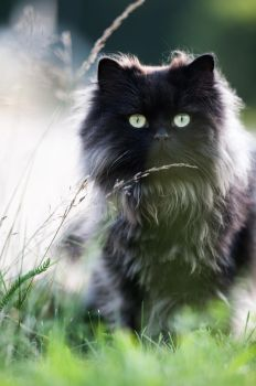 .ball of furr. by awphotoart