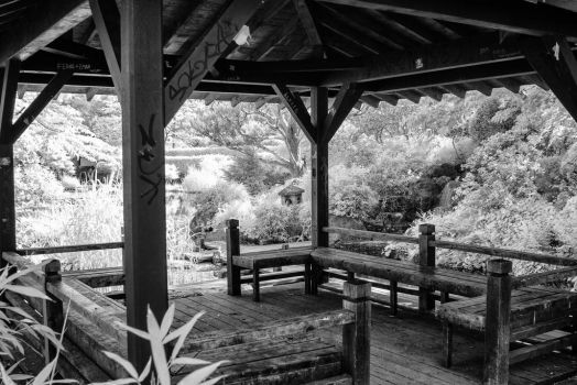 Japanese Garden by Bunny-with-Camera
