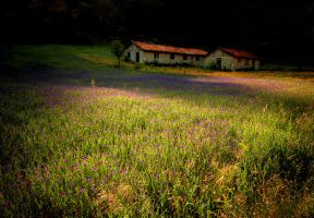 nature and light by berkerr