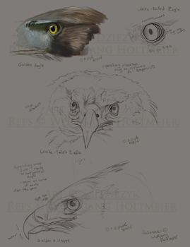 Eagle Studies 1 by LeccathuFurvicael