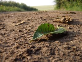 Leaf on the road 1 by wojtekmaj