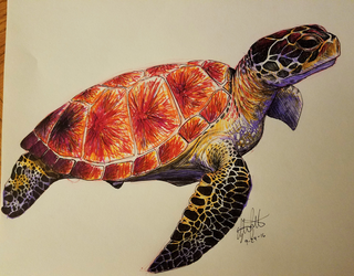 Sea Turtle by Child-of-God