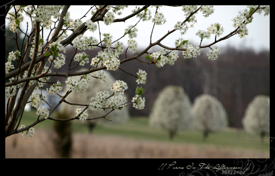 Pears In The Afternoon by Silvatine