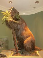 Fernbank MNH: Ground sloth I by Gilarah93