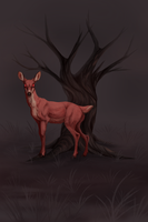 The Doe by Llutra