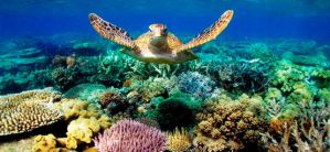 Barrier Reef by iannoylucy