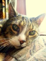 Tigger - Up close and personal by Jeaux-Latham