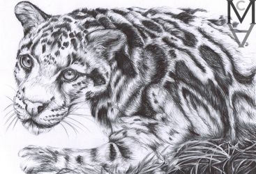 Clouded Leopard by sarah-mca-art