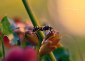 Visitor. by Phototubby