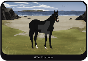 BTs Tortuga by Lone-Onyx-Stardust