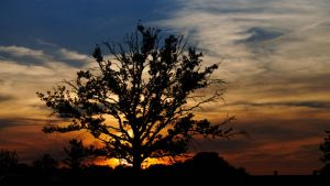 Lonely tree at sunset by JNW-Art