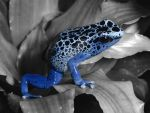 Amphibian (blue version) by Nina-photos-fox243