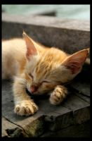 Sleeping Cat by Aschiontry