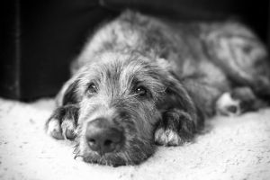 .: Puppy Blues :. by Frank-Beer