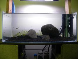 Iwagumi Aquascape no. 1 (in progress- part 1) by cathos13