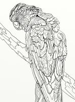 Page 5 of Australian Birds Adult Coloring Book by LorraineKelly